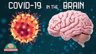 How COVID-19 Affects The Brain