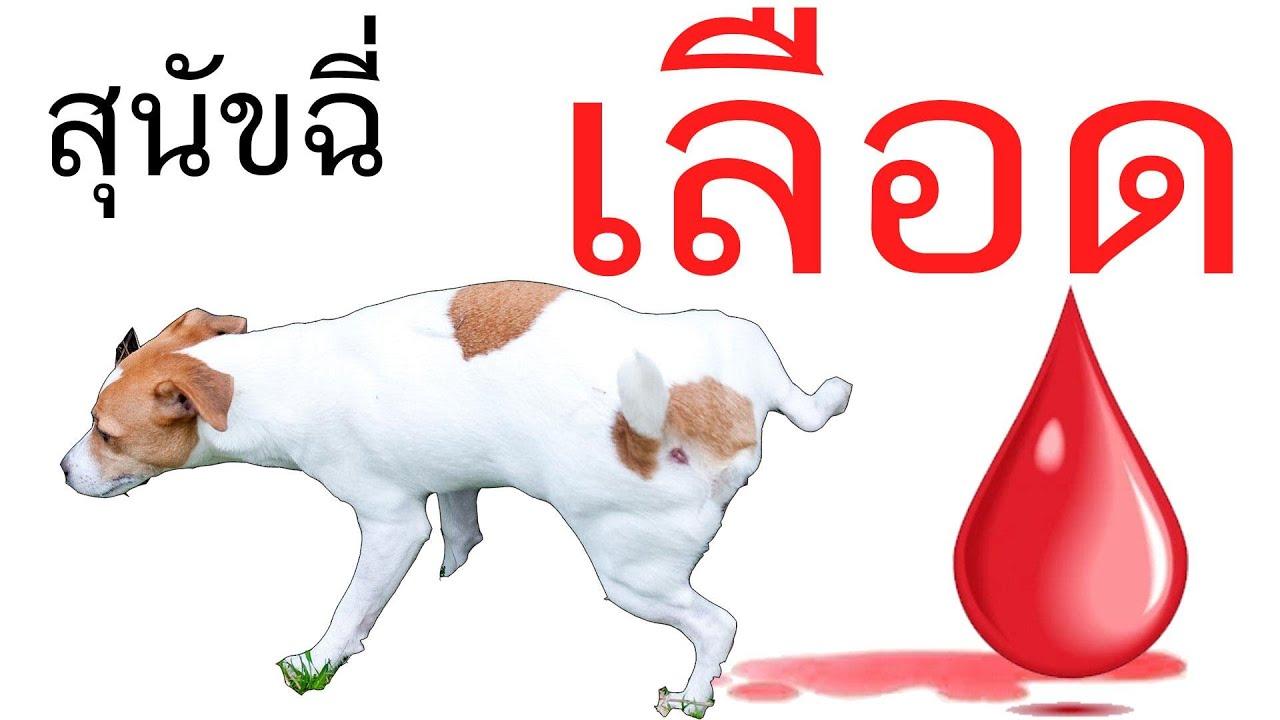 สุนัขฉี่เป็นเลือด ควร ทำอย่างไร ยาสลายนิ่วสุนัข กระปิดกระปอย สุนัขฉี่เหลือง ลูกสุนัขฉี่บ่อย กระปิด