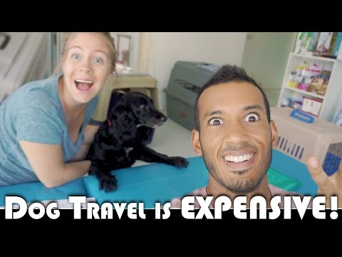 DOG TRAVEL IS EXPENSIVE! - LEAVING THAILAND MOVING TO PORTUGAL DAILY VLOG (ADITL EP309)