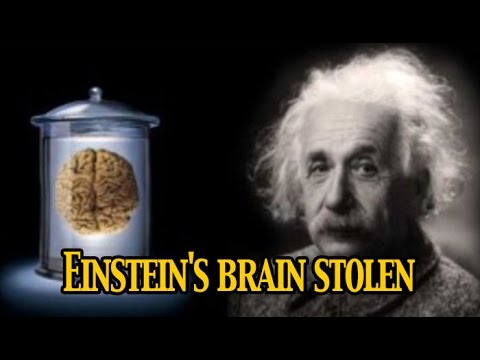 ordine Sconto del 60% numerosi in varietà Einstein's brain was stolen after his death NewspointTv