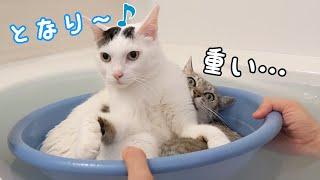 潰されても一緒にお風呂に入りたい猫たち