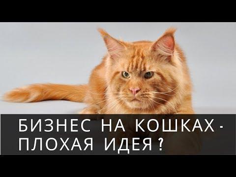 Вопрос: Какую породу кошек выгоднее разводить в Краснодаре в будущем 2020 году?
