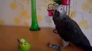 Приколы про попугаев, говорящие питомцы.