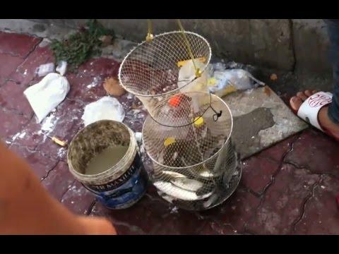 Cách bắt cá đối đơn giản và hiểu quả chỉ có ở Việt Nam