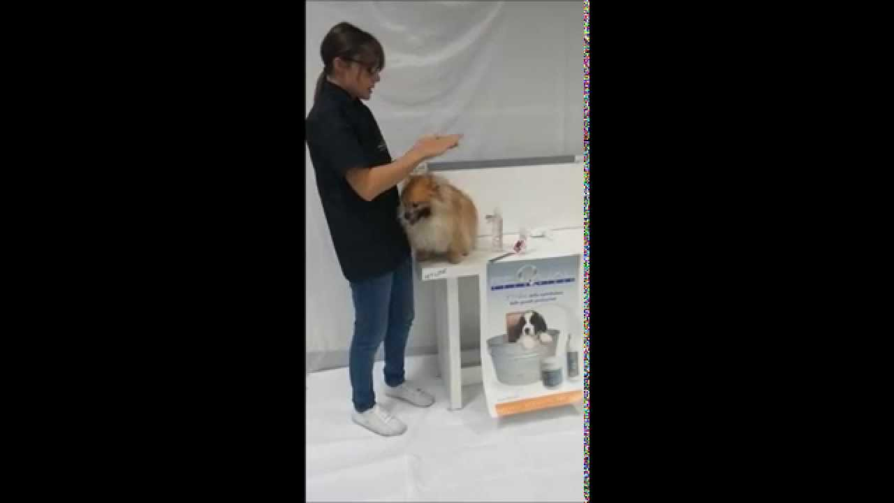 Cristalli liquidi per cani e gatti resilk for Youtube cani e gatti