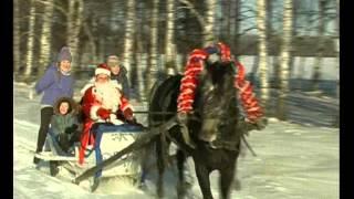 Дон-Эко-Тур: конный туризм зимой