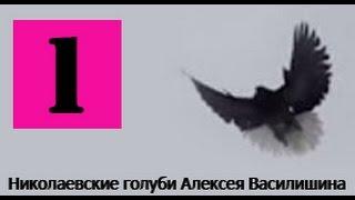 Голуби Крыма Алексей Василишин,Евпатория (1)(Крым Евпатория Лётные Торцовые Голуби +79780085391., 2015-01-11T19:10:15.000Z)
