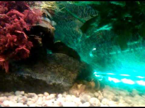 aquarium 450 liter mondlicht led beleuchtung youtube. Black Bedroom Furniture Sets. Home Design Ideas