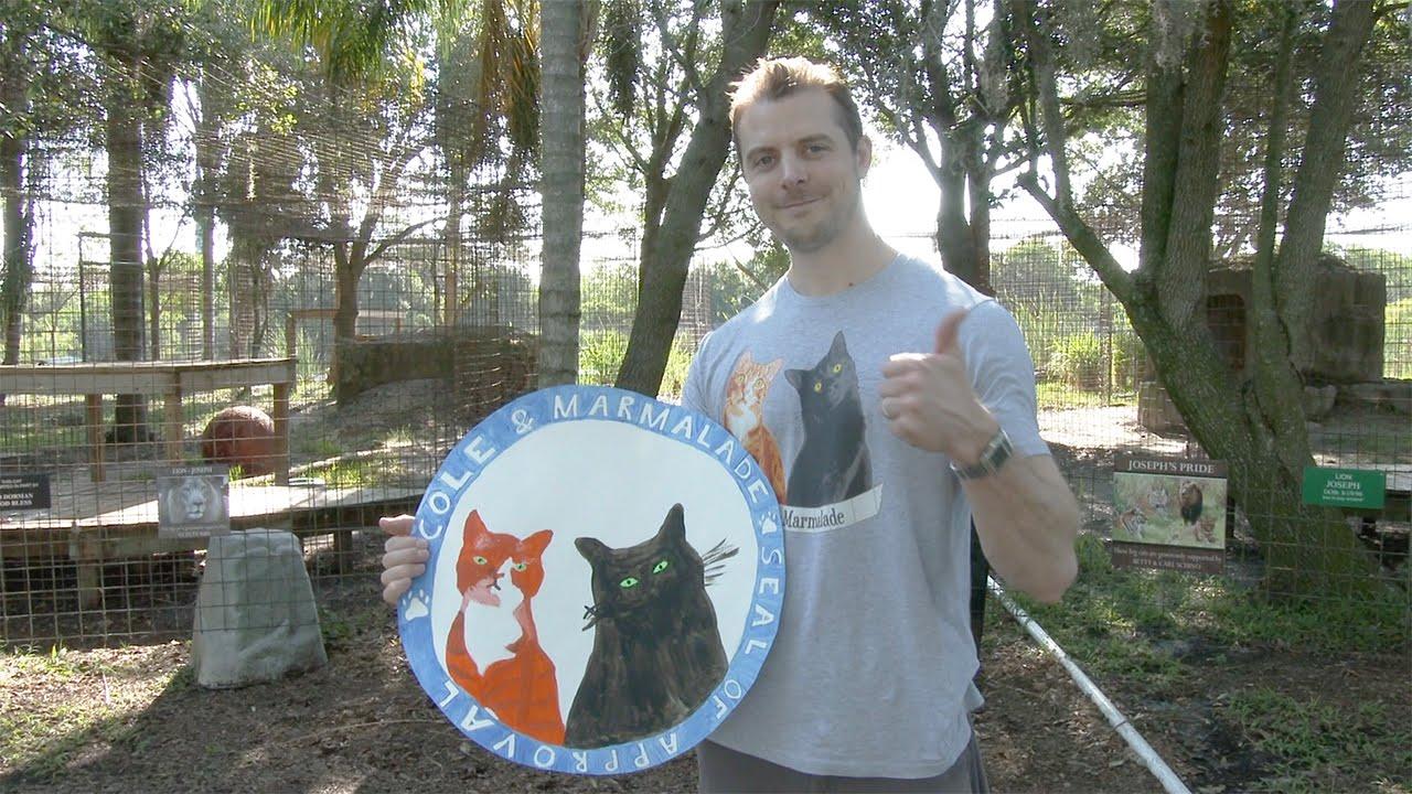 adopting an older cat tips