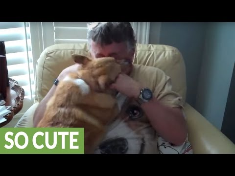 Corgi ecstatic to be reunited with owner