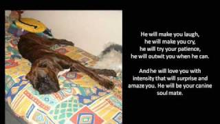 Boxer Dog Quotes And Poems With Pictures Of Hummer