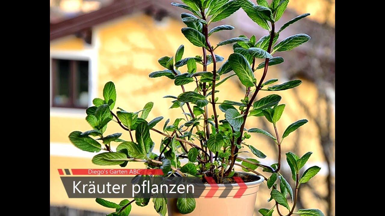 diy kr uter pflanzen in trog topf oder balkonkiste f r. Black Bedroom Furniture Sets. Home Design Ideas