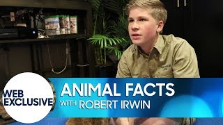 Animal Facts with Robert Irwin: Muntjac Deer