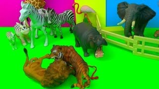 Happy Cute Zoo Animals - LION and TIGER Tug of War FIGHT - FUN ending