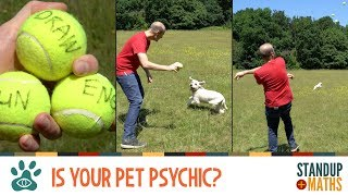 Psychic Pets: can your pet predict the World Cup results?