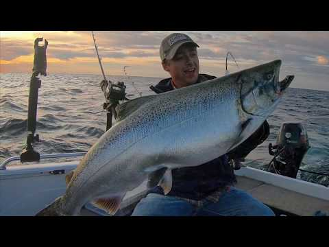 Lake Michigan King Salmon
