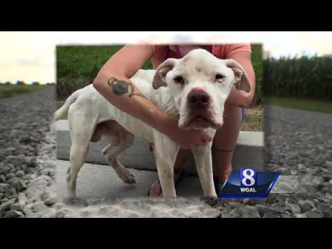 SPCA investigating case of two dogs found near death on Lancaster County road