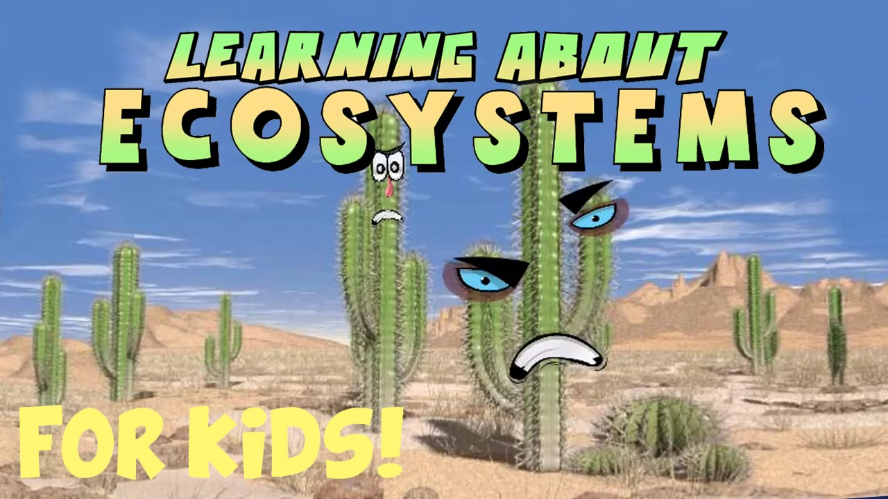medium resolution of Learning About Ecosystems - YouTube