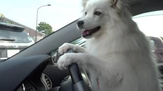 運転手は一歩さん・・・「どちらまでいくでしゅか?」 お客さんはハチ・...