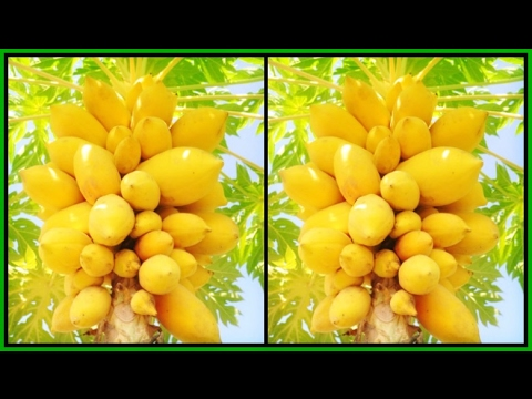 top-5-anti-aging-fruits-for-younger,-brighter-looking-skin-5-anti-aging-recipes-|khichi-beauty