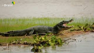 Parque Nacional do Pantanal Matogrossense | Parques do Brasil
