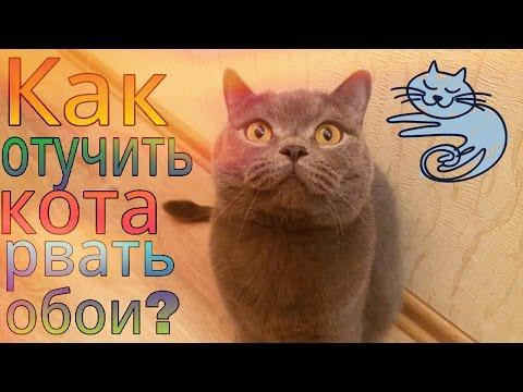 Как отучить кота или кошку рвать обои?