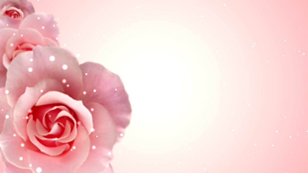 Roses Motion Background Free Hd Youtube