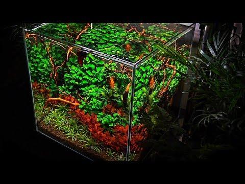 nano aquarium | aquascape | with lots of plants