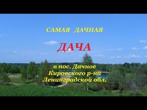 Дача, река, озеро, лес в 35 км от СПб #СветланаФилипповаСПб