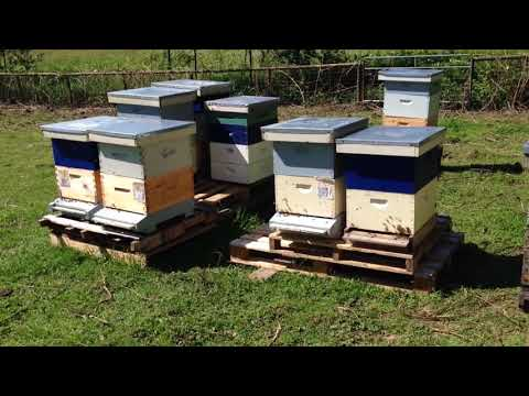 Vancouver bans bee-killing pesticide