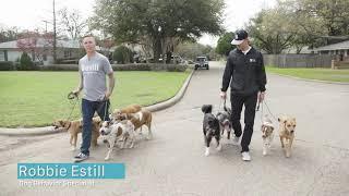 "Bevill Dog Behavior - Brad and Robbie Talk ""Pack Walks"""