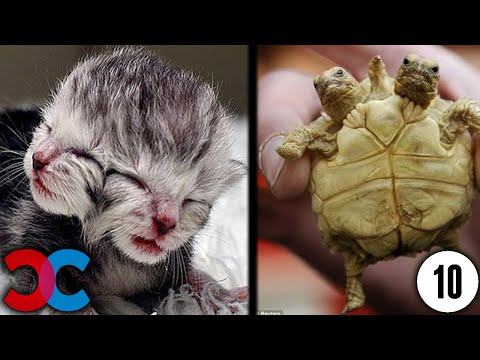 Owners are CRYING, you are LAUGHING! - Funny ANNOYING & TROUBLEMAKING ANIMALS from YouTube · Duration:  10 minutes 2 seconds