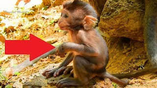 You Will Drop Your Tear Unconsciously,When Watching Poor Baby Monkey Broken His Hand, Very Pain!