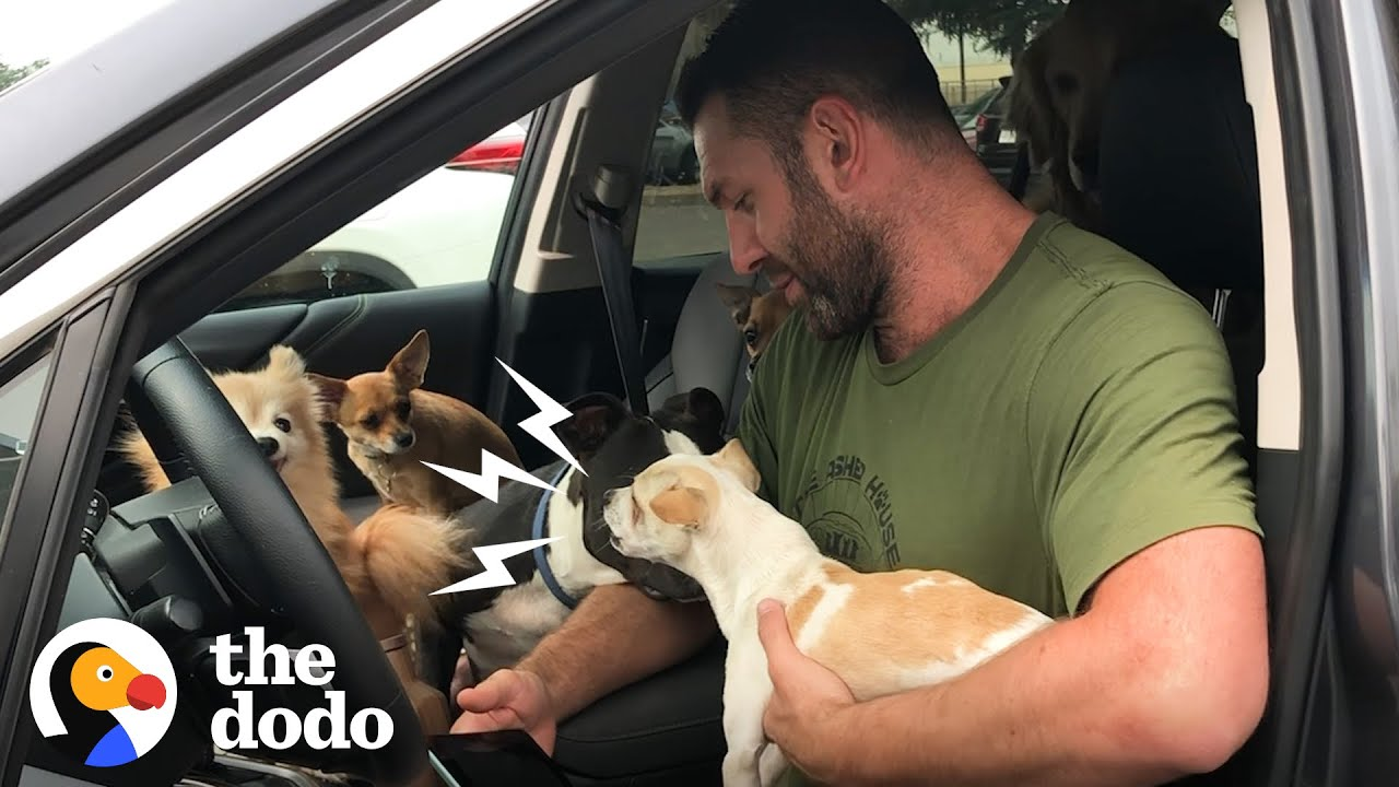 Snarling Rescue Chihuahua Becomes A Daddy's Boy  | Ruff Life With Lee Asher