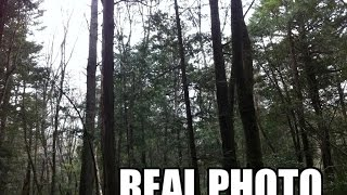My personal experience: Japan's Suicide Forest (True story)