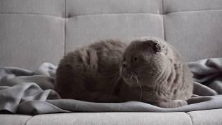 Видеозаставка Отдыхающий кот (Video screensaver Resting cat)