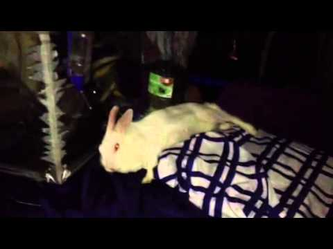 Camus Durmiendo