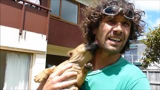 Dog Training Tips & Tricks - A Complete Dog Obedience Training Course in 5 Part!!