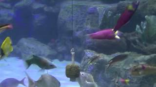 fish aquariums that include colorful fish coral reefs and plants february 2014