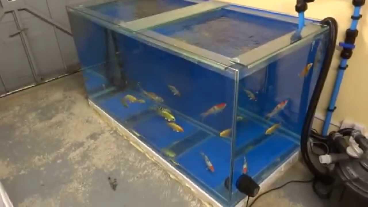 Keeping koi indoors youtube for Indoor koi aquarium