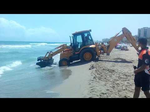 Sacando Media vaca de la playa Los Arenales del Sol (Santa Pola)