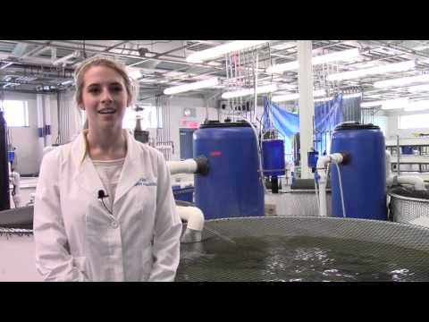 Bridgeport Regional Aquaculture Science and Technology Education Center Tour - Buck Scientific