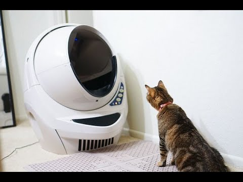 Automatic Self-Cleaning Litter Box For Cats - What You Think?