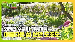 수국의 향기 느낄 수 있는 '신안 도초도'ㅣ생방송 투데이(Live Today)ㅣSBS Story