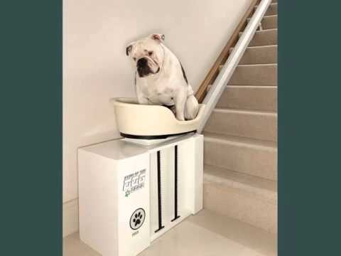 Set Of Useful Picture Ideas Of Dog Beds With Stairs | Dog Beds With Stairs    YouTube