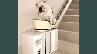 Set Useful Picture Ideas Dog Beds Stairs