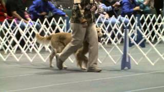 Obedience - Masters Utility Class - Jump Height 24 Inches