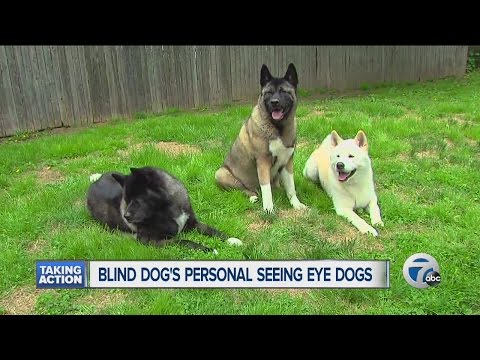 Blind dog's personal seeing eye dogs