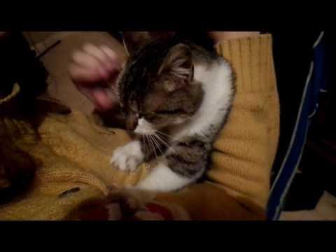 Киця  масажистка