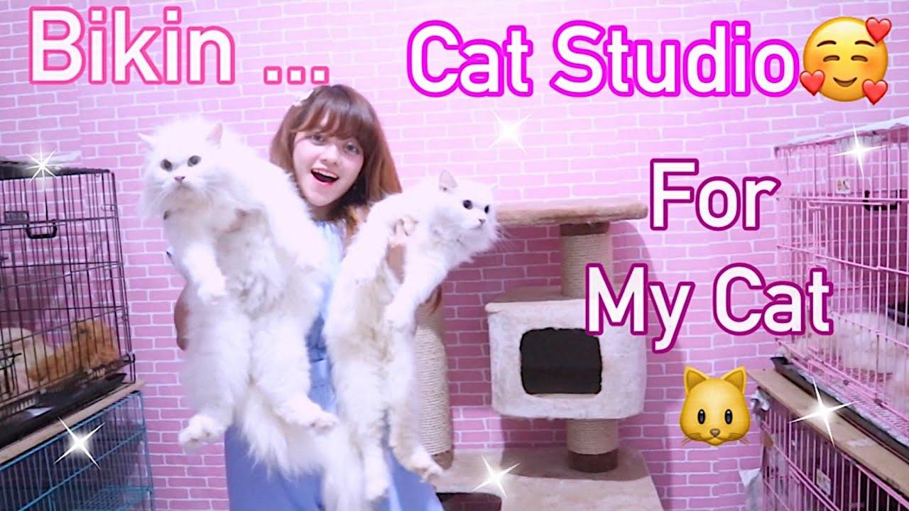 INI DIA CAT STUDIO ALA MOMMY - RUTINITAS RUANG BARU & REVIEW KALUNG KEREN BUAT KUCING YEYYY